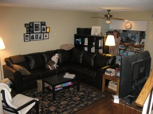 Living room with sofa and bulldog
